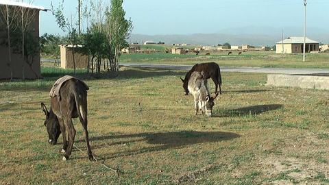 rural landscape in uzbekistan Stock Video Footage