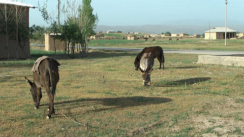 rural landscape in uzbekistan Stock Video Footage