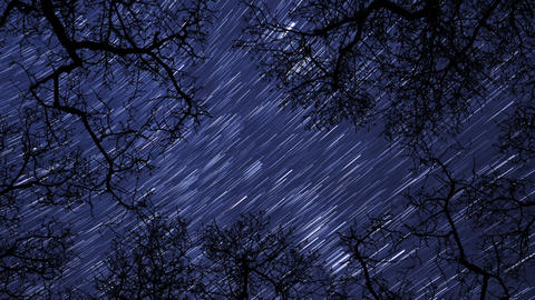 night sky stars between trees time lapse star trail 10938 Stock Video Footage