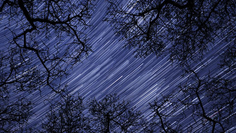 night sky stars between trees time lapse star trail 10938 Footage