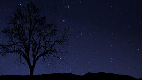 night sky stars tree time lapse star trail 10940 Stock Video Footage