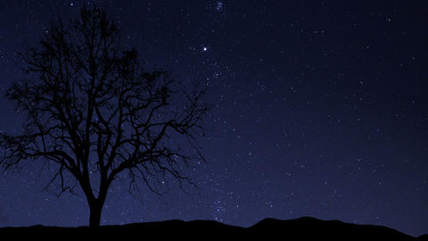 night sky stars tree time lapse star trail 10940 Stock Video Footage