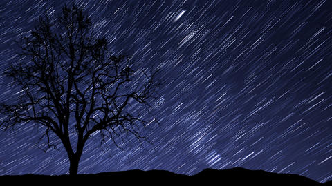 night sky stars tree time lapse star trail 10940 Footage