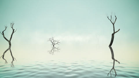 River with old trees and fog loop Animation