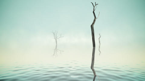 River with old trees and fog loop Stock Video Footage