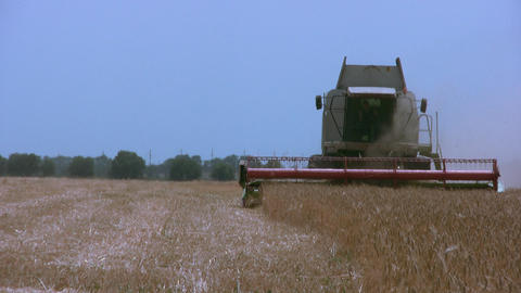 Harvester gathers the wheat Footage