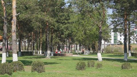 Heihe Park Longbin Pines (02) Footage
