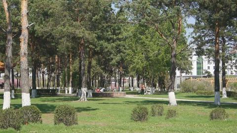 Heihe Park Longbin Pines (02) Stock Video Footage