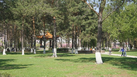 Heihe Park Longbin Pines (04) Stock Video Footage
