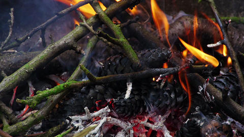 Burning twigs, sprigs and cones Stock Video Footage
