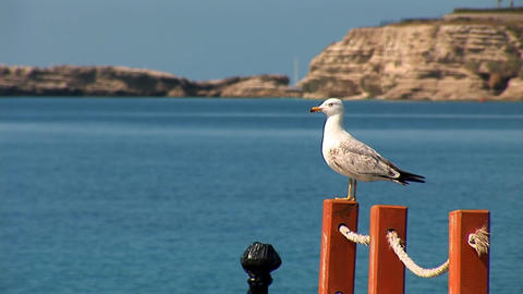 beautiful and honour seagul Stock Video Footage