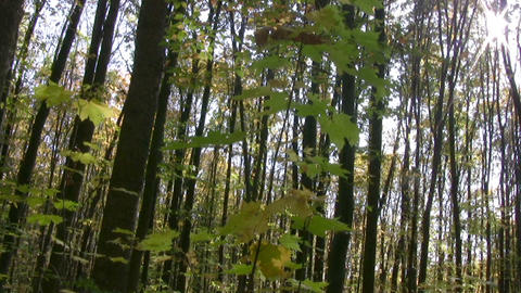 Panorama of the autumn forest Stock Video Footage