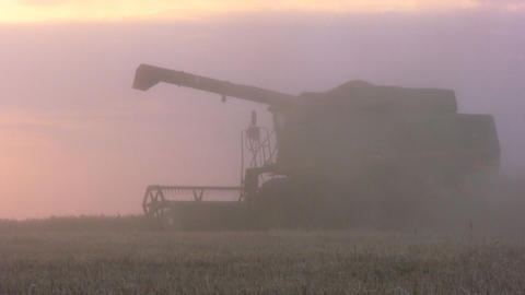 Combine harvest against the backdrop of sunset Stock Video Footage
