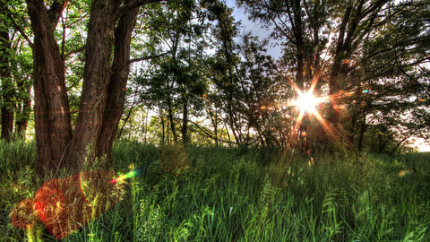 4k. Time-lapse Of Nature Spring Forest Stock Video Footage