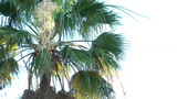 Palm moving over a summer weather Footage