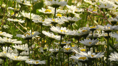Summer Flowers 15 Footage