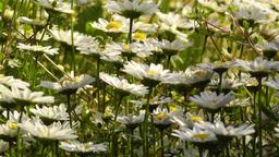 Summer Flowers 15 Stock Video Footage