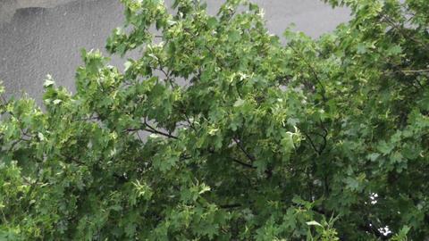Summer Rain 1 Stock Video Footage