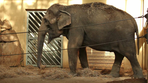 Small elephant in zoo Stock Video Footage