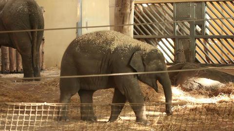 Elephants in zoo Stock Video Footage