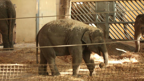 Elephants in zoo Stock Video Footage