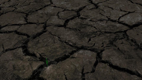 Breaking the drought Stock Video Footage