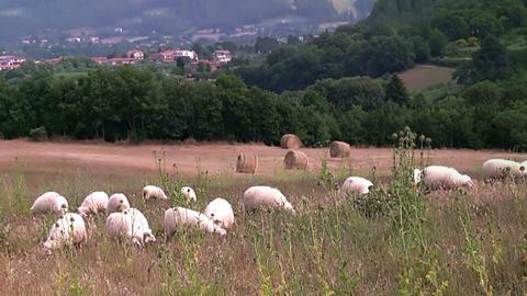 Rural landscape. Tuscany Footage