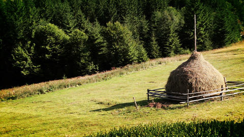 Coniferous forest and haymaking Stock Video Footage