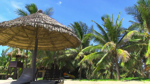 Tropical beach with palm tree Stock Video Footage