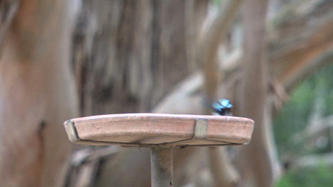 Little blue bird Stock Video Footage