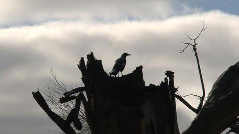 bird 06 Stock Video Footage