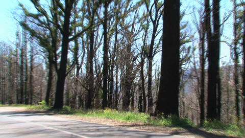 Zoom-out from burned trees while car passing by at Stock Video Footage