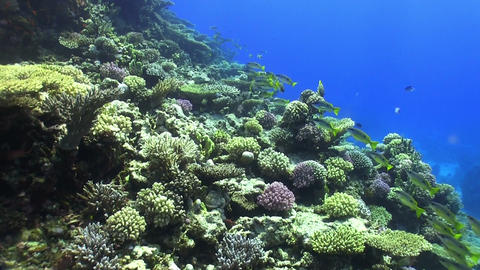 Shoal of Yellow Fish on Coral Reef Stock Video Footage