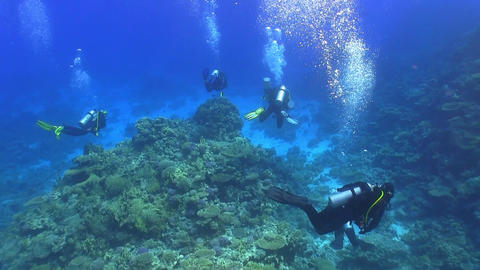 Group of divers swims over coral reefs Footage