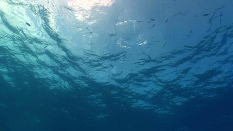 Plastic bag floating in ocean Stock Video Footage