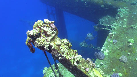 Shipwreck Salem Express in Red Sea Footage