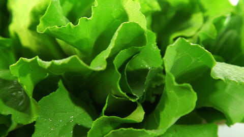 Lettuce leaf Footage