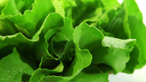 Lettuce leaf Stock Video Footage