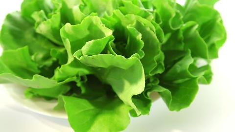 Lettuce Stock Video Footage