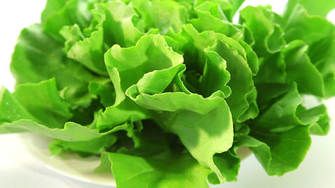 Lettuce Stock Video Footage