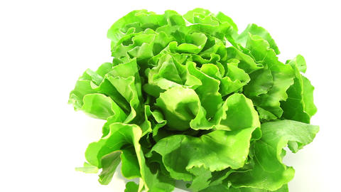 Green lettuce Stock Video Footage