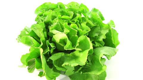 Green lettuce Stock Video Footage