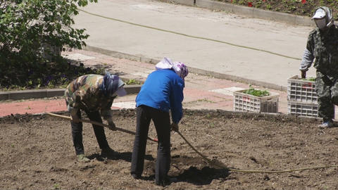 Chinese women planted flowers in the flowerbed 01 Stock Video Footage