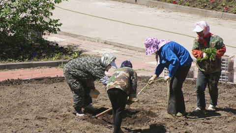 Chinese women planted flowers in the flowerbed 01 Footage