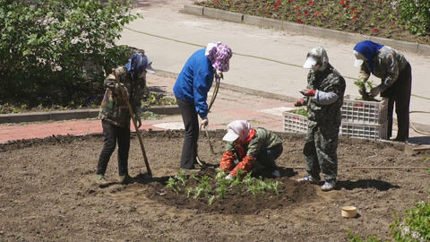 Chinese women planted flowers in the flowerbed 03 Footage