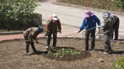 Chinese women planted flowers in the flowerbed 03 Stock Video Footage