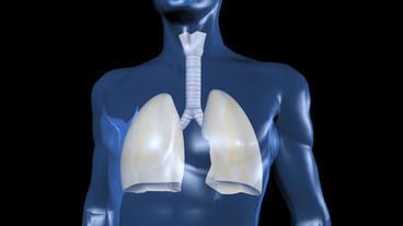 human body & breathing lungs Animation
