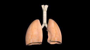 breathing lungs animation Stock Video Footage