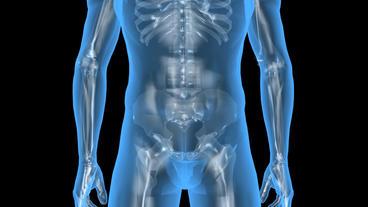 3D transparent human nude body & skeleton Animation