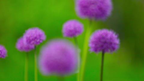 Bee on flower Stock Video Footage